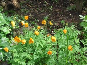 15 mei 2012 oranje slaapmutjes